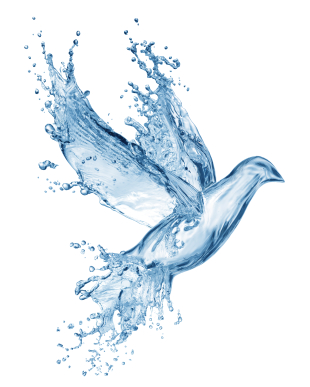 dove made out of water splashes isolated on white